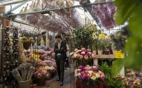 Голландские предприниматели обеспокоены решением РФ усилить контроль за ввозимыми цветами