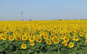 Кабмин дополнительно выделил 3,8 млрд рублей на растениеводство