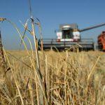 В Россельхознадзоре прокомментировали ситуацию с поставками зерна в Турцию