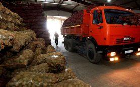 Россия обеспечена овощехранилищами на 10-15%