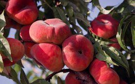 В Сербии анализируют ситуацию с поставкой в Россию зараженных фруктов