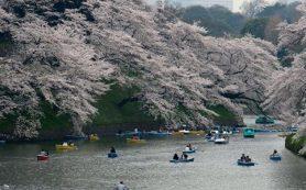 Япония решила изменить правила выдачи виз туристам из РФ