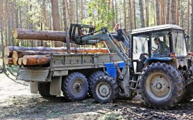Влияет ли рубка леса на заболачивание уникальных ленточных боров на Алтае