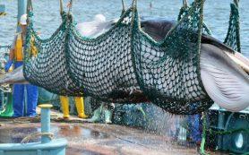 Япония, «наплевав» на мир, решила начать бойню китов