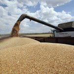 Экспорт зерна из России с начала сельхозгода вырос на 28,5%